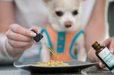 Recognizing Merely Cbd Oil For Pet Dogs Uk
